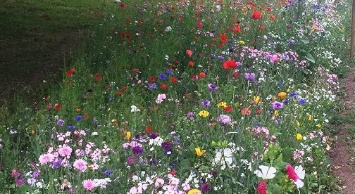 Monmouthshire Council Praises Usk in Bloom Pollinator Award