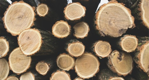 40 Jobs Saved after Flintshire Tree-Cutting Firm Buy-Out